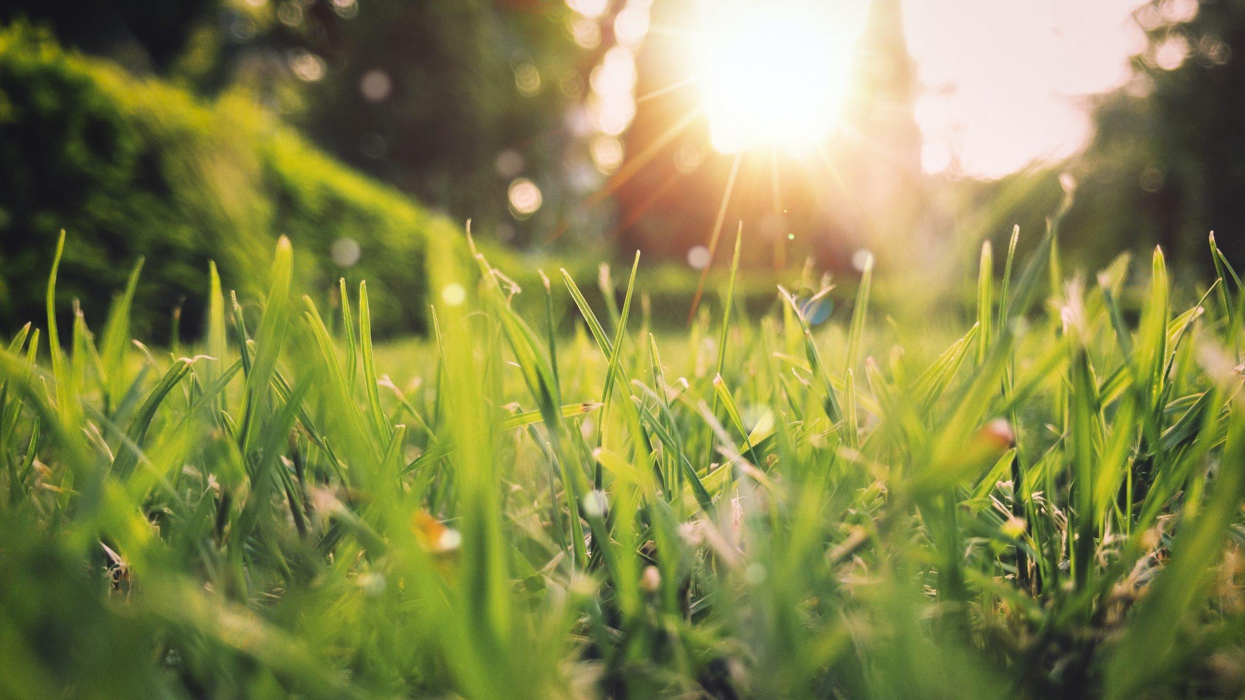 green grass field sunset scenery